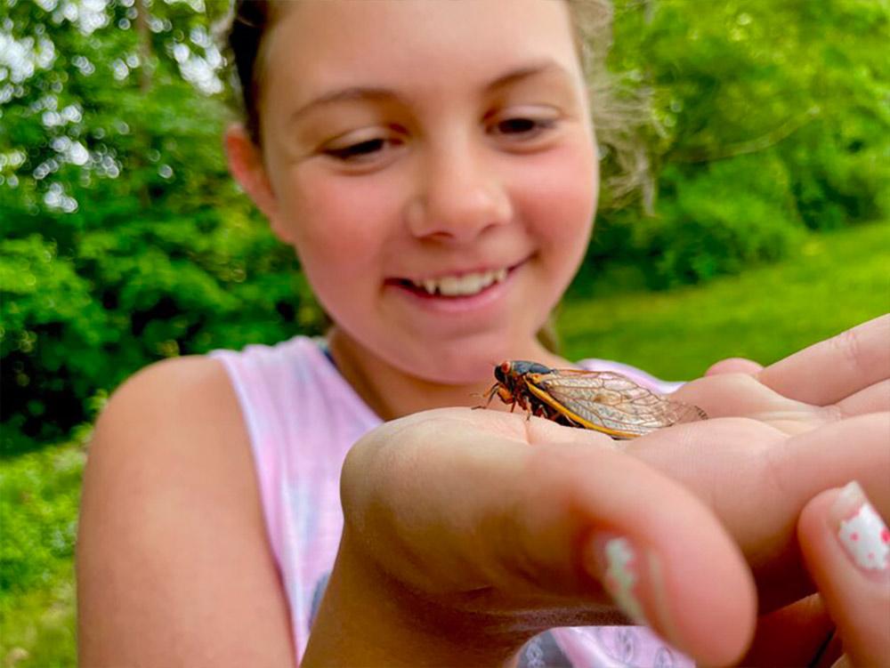 Community outreach teaching about cicadas