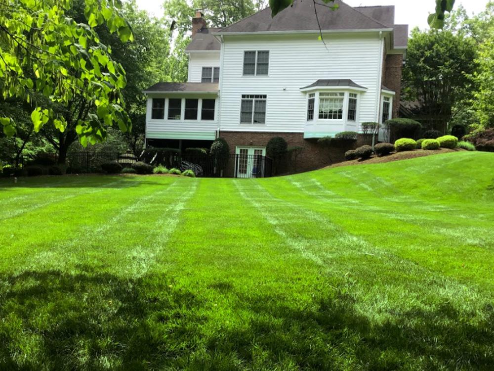 big yard with green grass