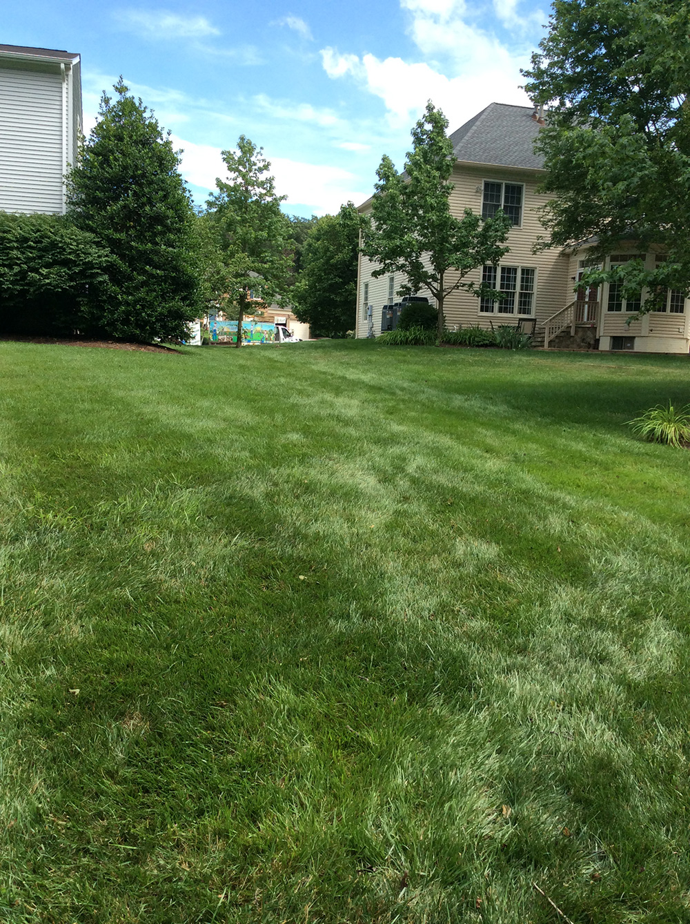 Organic flea and tick spray on lawn