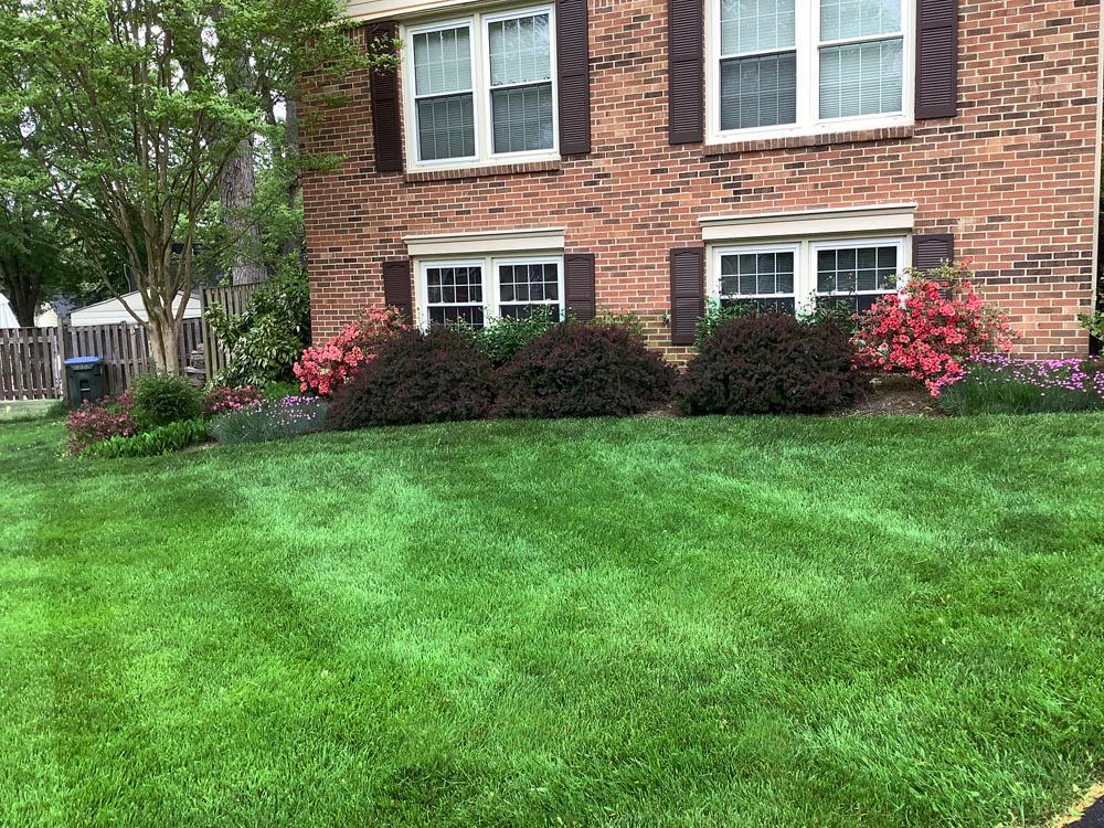 grass lawn treatments
