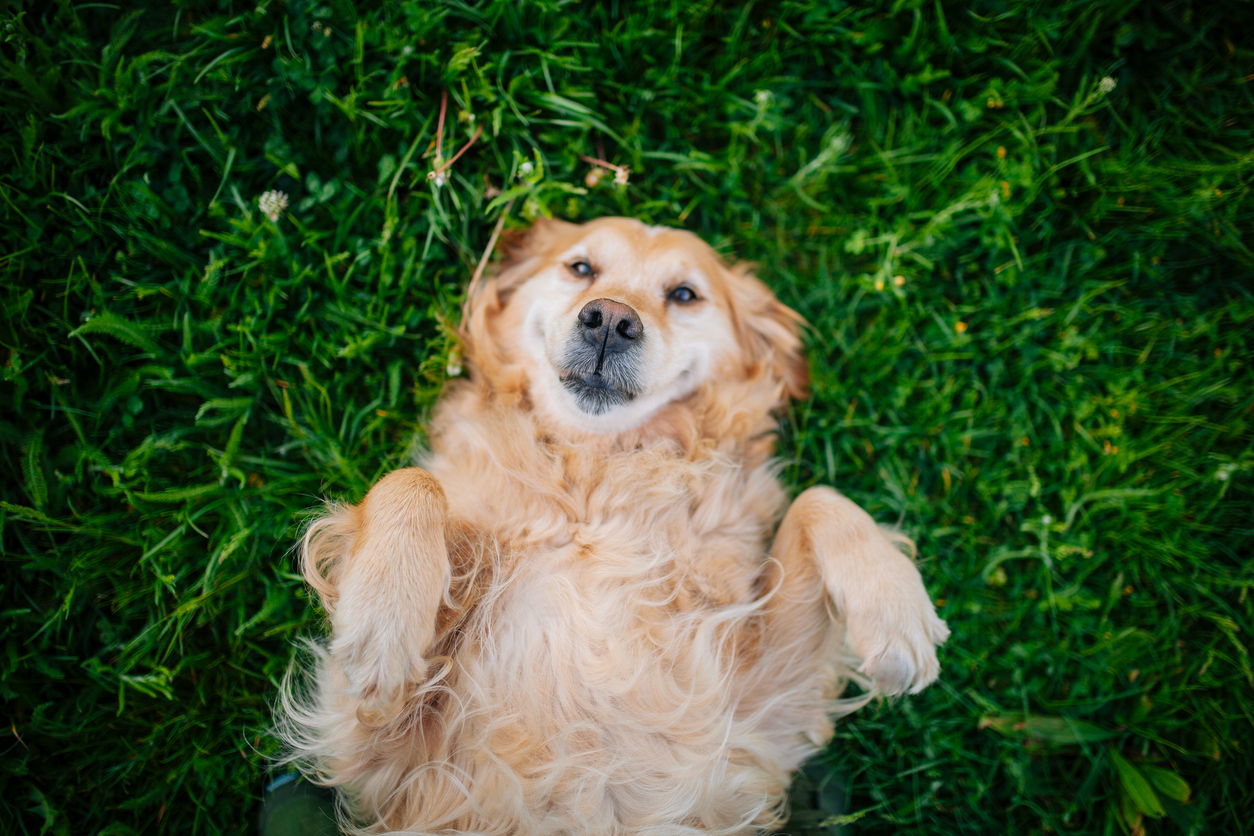 Protecting animals with flea and tick control program