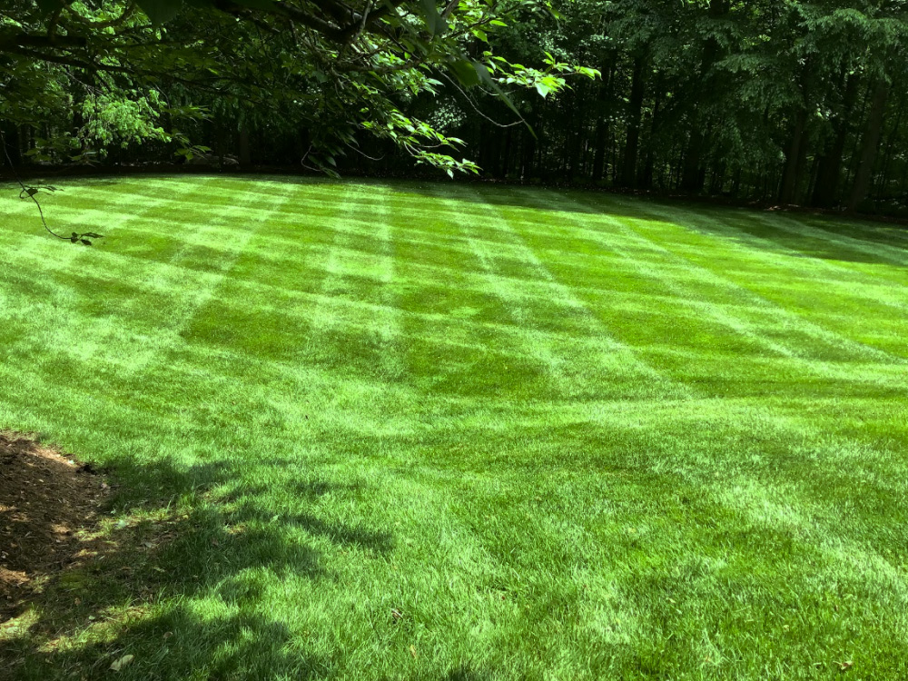 Large lawn green grass