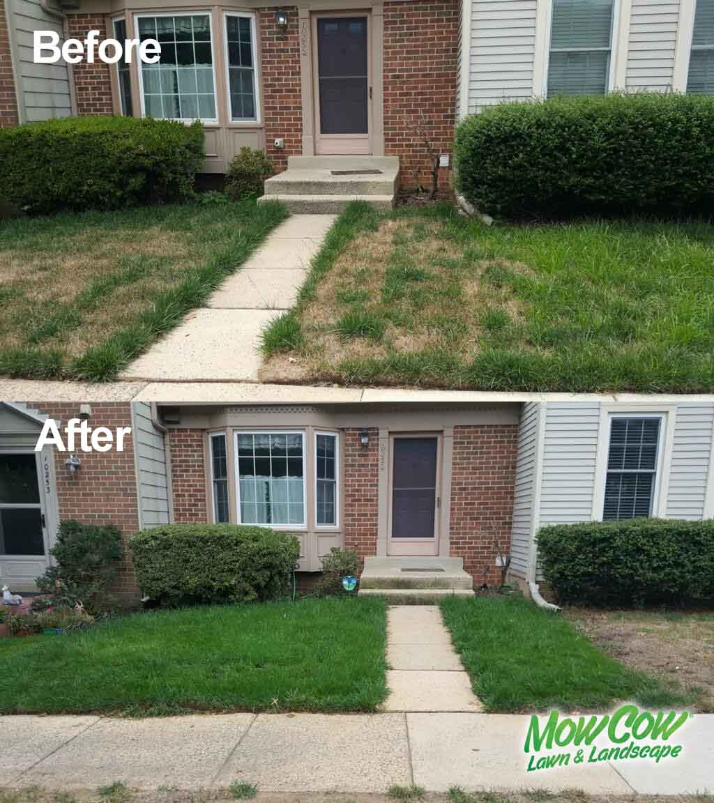 Aeration and seeding Before and After