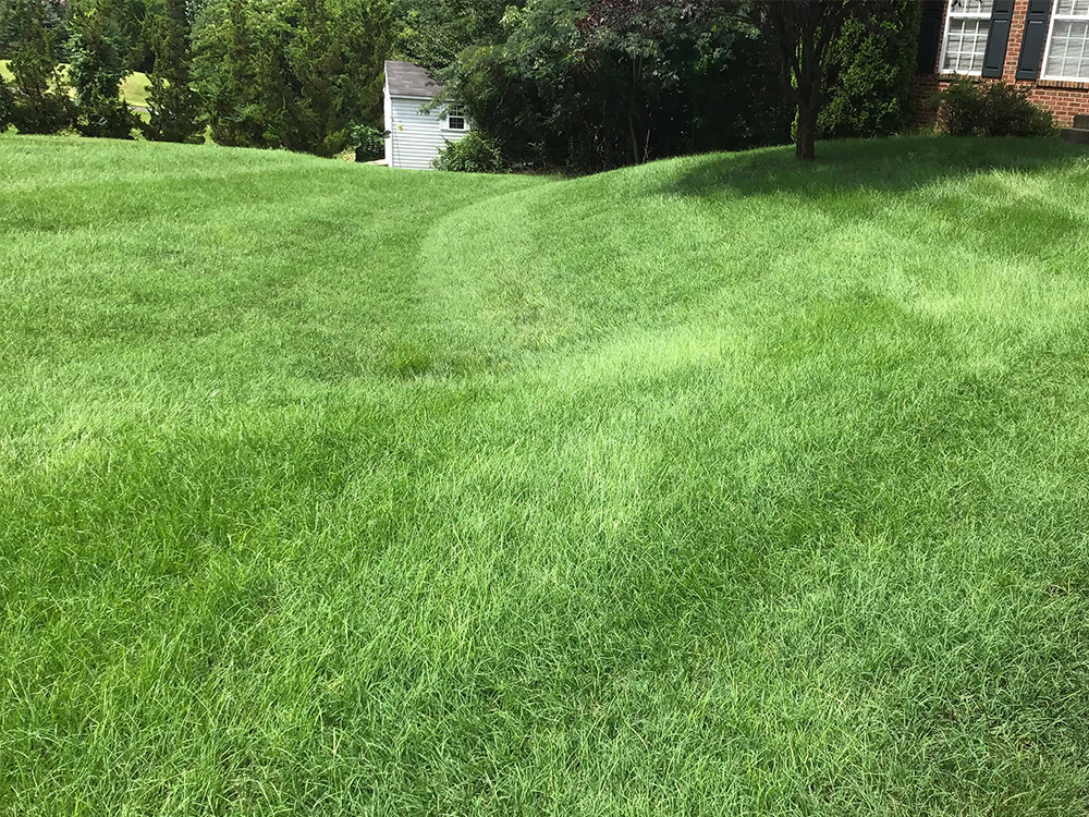 Aeration and seeding made green grass