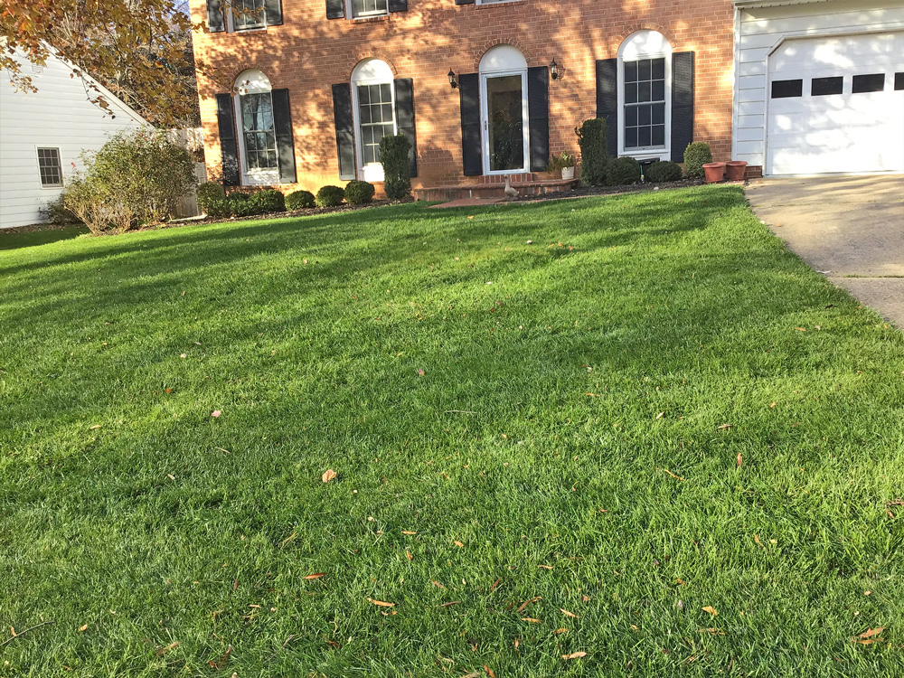 Full growing lawn getting larger