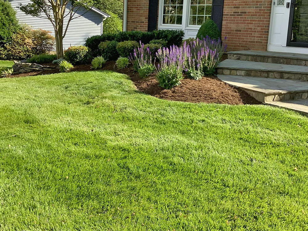 Green grass from mowing and lawn care in front of mulch beds