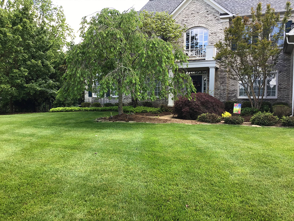 Lawn care and lawn mowing front yard in Burke