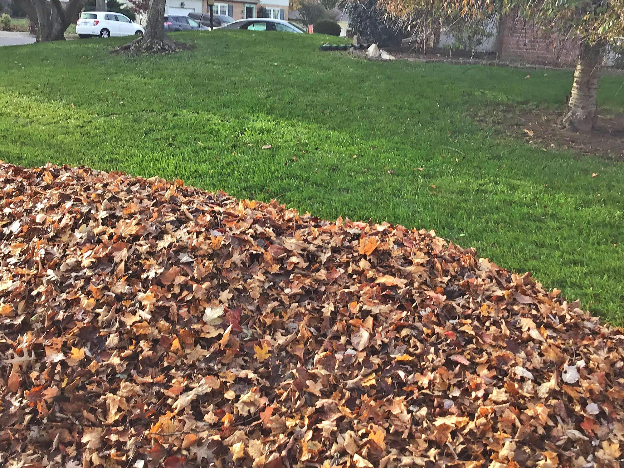 Leaf removal clean up