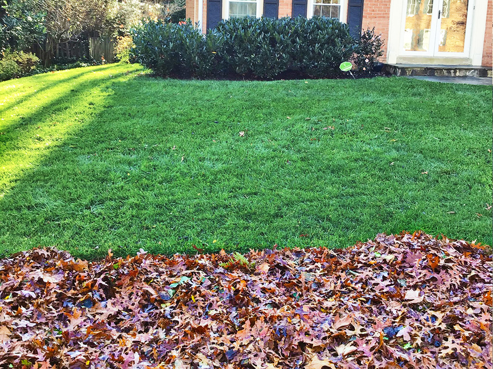 Leaves removed from green grass