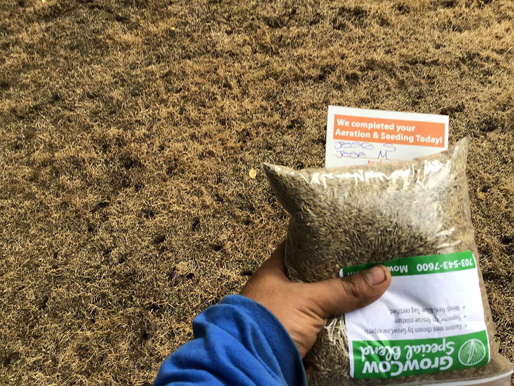bag of grass seed over bad grass for aeration and seeding