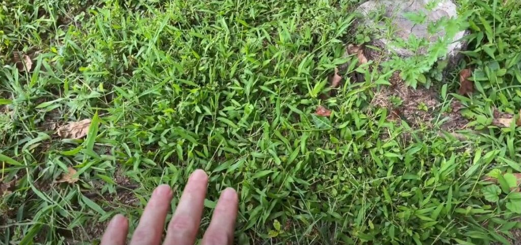 Explaining why you can't grow grass
