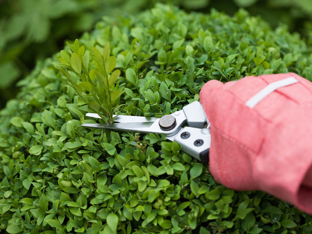 Hand pruning bush