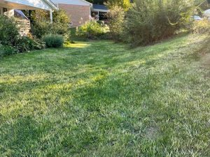 Weed control turns lawn white